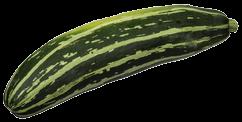 CSA-Striped-Zucchini7_transp